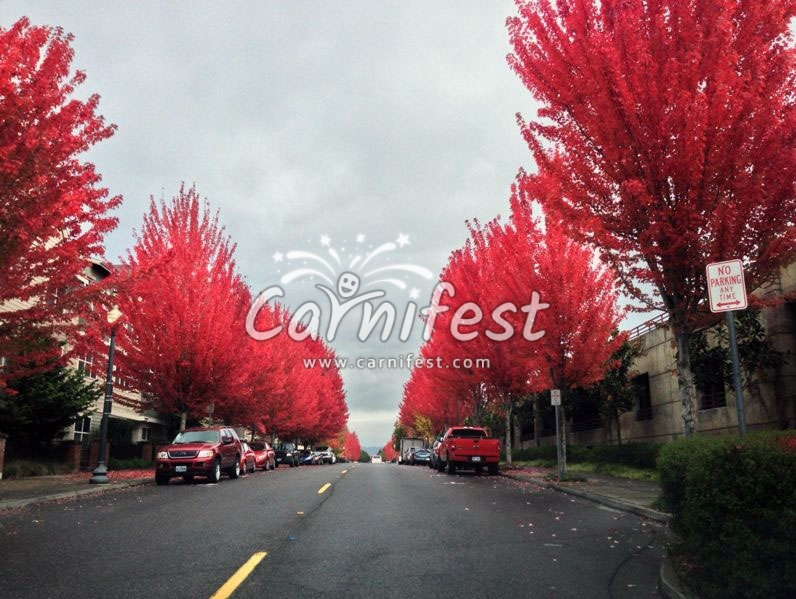 Automne - CarniFest Online Photo © All Rights Reserved