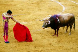 Bullfighting - Photo by: nicoo