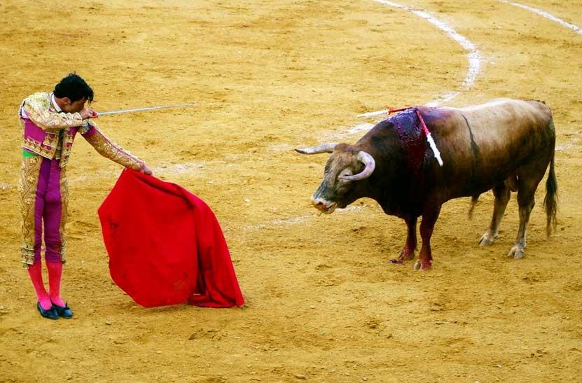 Bullfighting - Photo by: nicoo