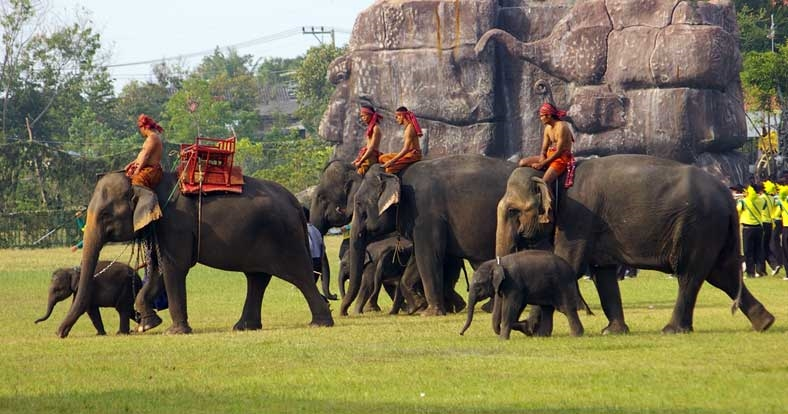 Elephants Round-Up in Surin - Photo by: freebeerforyorky.com