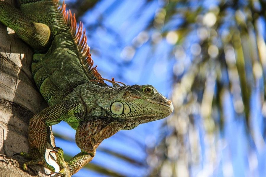 Salamander - Photo by: By Unsplash Via pixabay.com