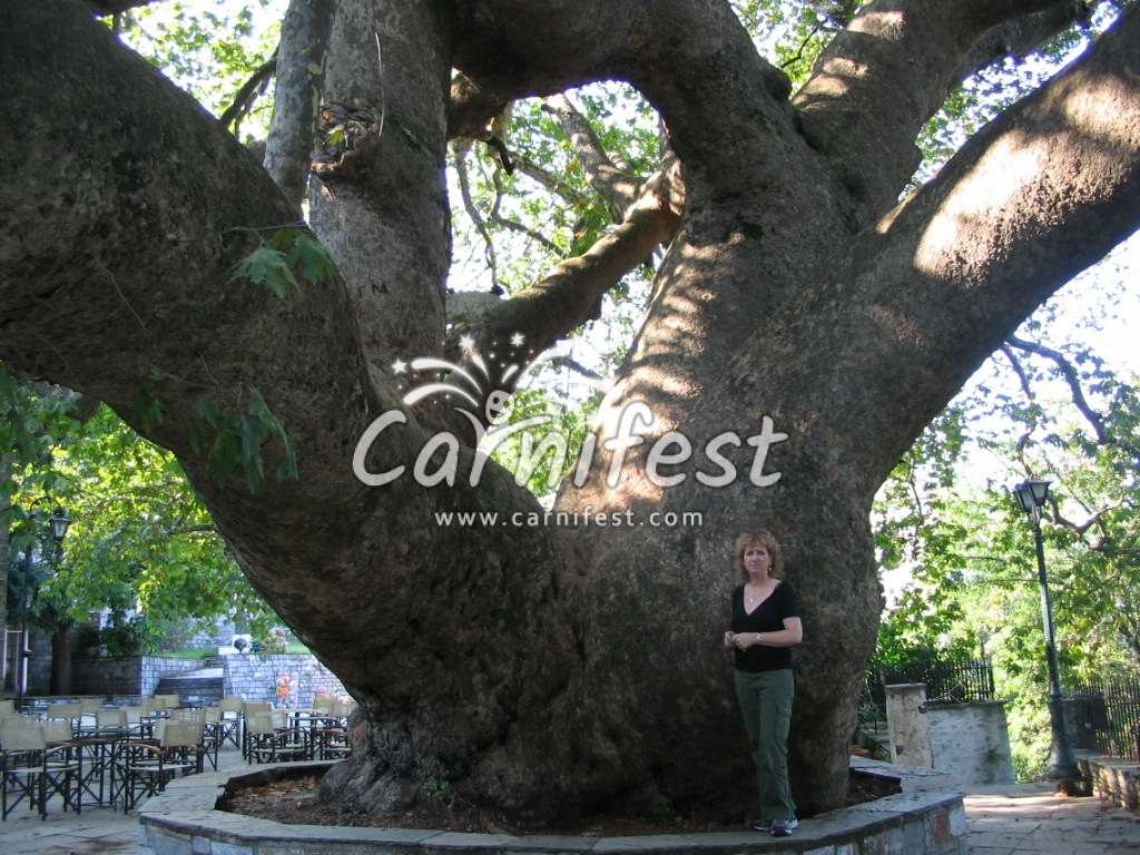 The giant Plane tree in Tsagkarada - CarniFest Online Photo © All Rights Reserved