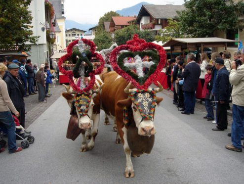 The transhumance in Reith im Alpbachtal