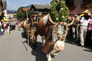 The transhumance in Reith im Alpbachtal - Photo by: www.alpbachtal.at