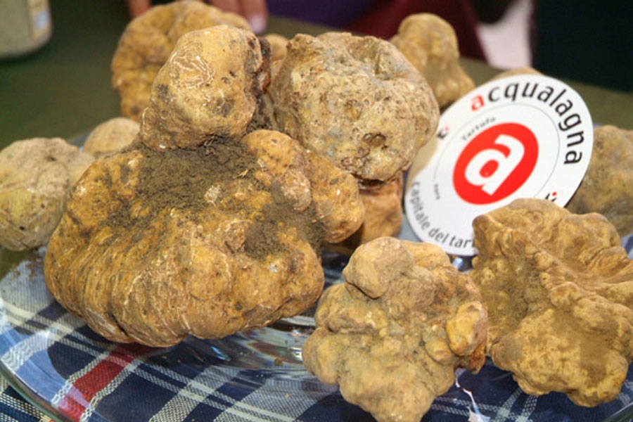 The White Truffles of Acqualagna - Photo by: www.acqualagna.com