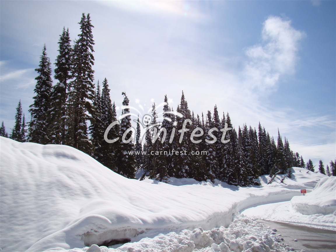 Frozen in the Canadian Rockies - CarniFest Online © All Rights Reserved