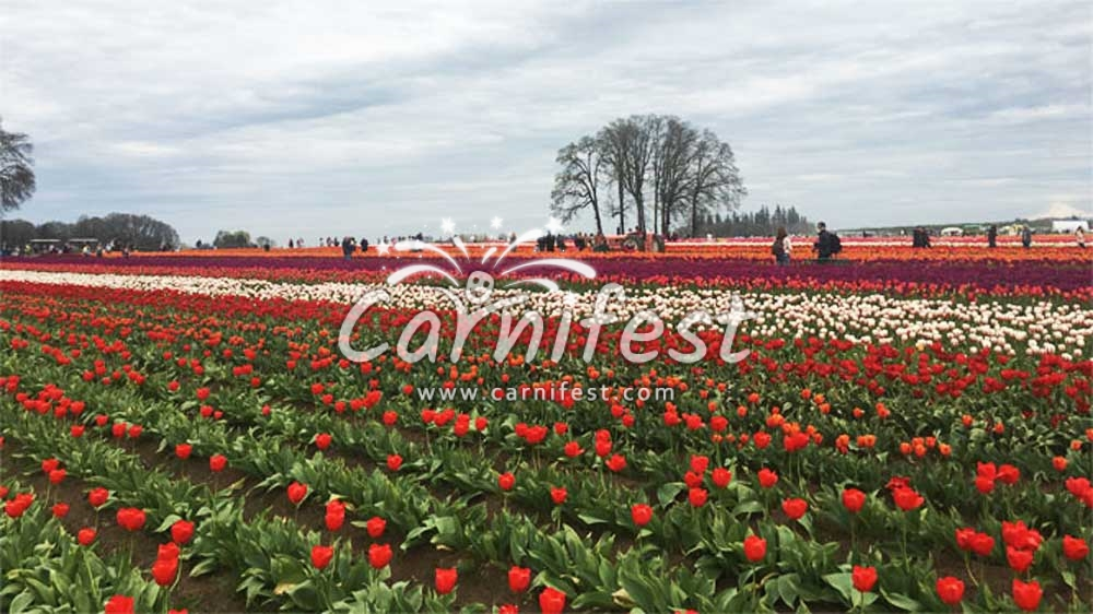 Wooden Shoe Tulip Fest - CarniFest Online Photo © All Rights Reserved